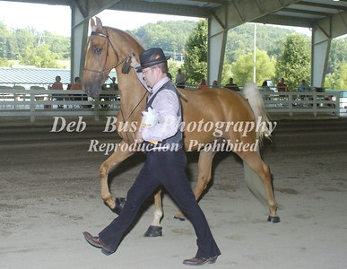 2014 TENNESSEE STATE CHAMPIONSHIP NATIONAL RACKING HORSE SHOW