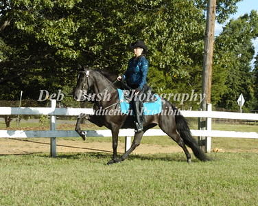 2014 STANLY COUNTY SADDLE CLUB  58TH ANNUAL WALKING HORSE SHOW  SEPT 6-2014