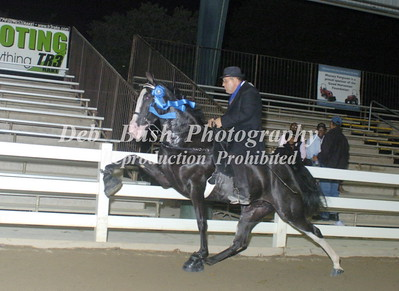 CLASS 39  4 YR OLD MARES & GELDINGS RC SPECIALTY