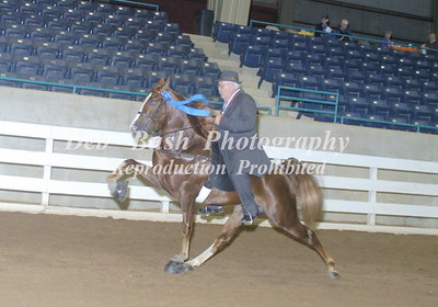CLASS 27  THREE YR OLD OPEN STALLIONS - RC