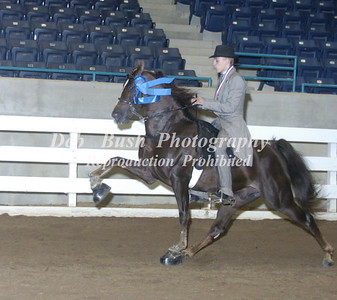 CLASS 33  JUVENILE PONY 17 YRS & UNDER SPECIALTY