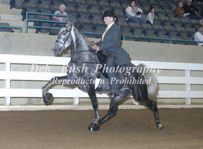 CLASS 43  THREE YR OLD AMATEUR MARES & GELDINGS