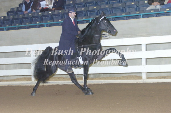 CLASS 54 THREE YR OLD AMATEUR STALLIONS