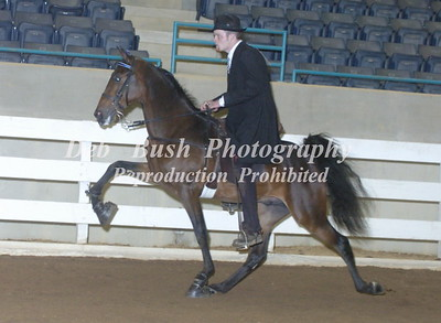 CLASS 59 TWO YR OLD AMATEUR STALLIONS