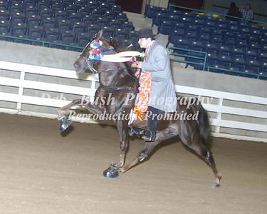 CLASS 69  CA FAULK MEMORIAL WALKING HORSE CHAMPION - RC