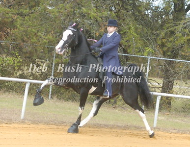 SUMTER COUNTY WALKING HORSE CHAMPIONSHIP- 2014  NOV 8