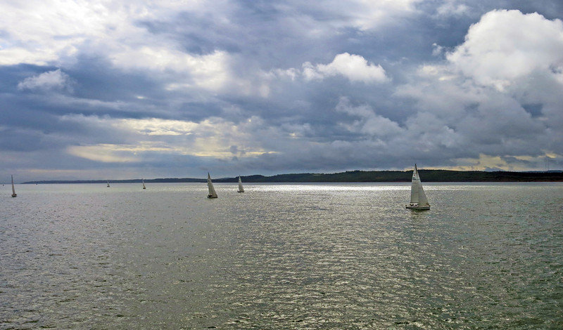 A flotilla of yachts, against the light, coming from Cowes