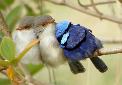 Colorful Birds Cudding Together to keep warm