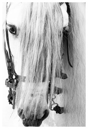 Horsy, horses on thei own, magestic