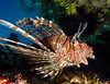 Pamela Reuter's Underwater Photography : 1 gallery with 21 photos