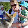 Amy Renes and her son Jake, 2, look at a mounted coyote during the 11th Annual Trail Adventure in the Westlake neighborhood on Saturday.<br /> June 2, 2012 <br /> staff photo/ David R. Jennings