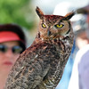 A Great Horned Owl with Birds of Prey was on display for participants to learn about birds of prey during the 11th Annual Trail Adventure in the Westlake neighborhood on Saturday.<br /> June 2, 2012 <br /> staff photo/ David R. Jennings