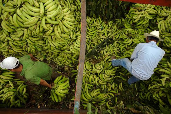 People work delivering bananas in La Terminal market during Labor Day in Guatemala City, Saturday, May 1, 2010. (AP Photo/Rodrigo Abd)