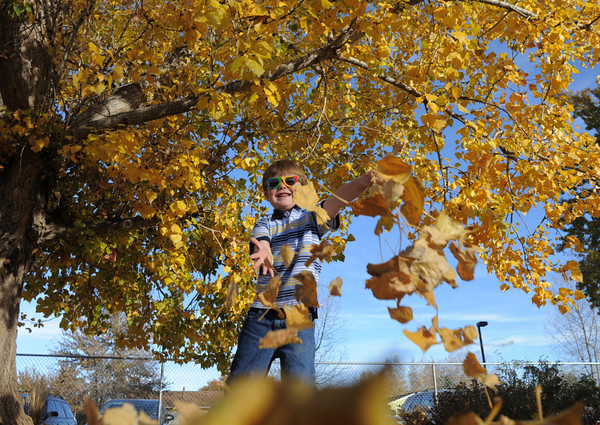 Zachary Hughes, 6, turned his attention to the fall leaves in the playground during the Bal Swan Children's Center Pint-Sized Ball on Saturday.<br /> November 6, 2010<br /> staff photo/David R. Jennings