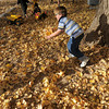 Zachary Hughes, 6, turned his attention to playing in the fall leaves into in the playground during the Bal Swan Children's Center Pint-Sized Ball on Saturday.<br /> November 6, 2010<br /> staff photo/David R. Jennings