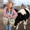 "be0122chicken02.jpg Shelby Grebenc, 12, is greeted by Spot, one of the family's steers, while carrying about 13 dozen eggs gathered from 130 chickens for her business ""Shelby's Happy Chapped Chicken Butt Farm"" at the family home of 4 acres in Broomfield on Thursday. Grebenc is the youngest person to be certified as an Animal Welfare Approved chicken farm.<br /> For more photos please see  <a href=""http://www.broomfieldenterprise.com"">http://www.broomfieldenterprise.com</a><br /> January 19, 2012<br /> staff photo/ David R. Jennings"