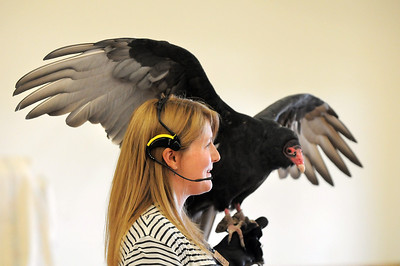 Rachel Mansfield talks about Turkey Vultures while holding Chuck during the Birds of Prey Foundation presentation for the Broomfield Open Space Foundation at the Broomfield Community Center on Saturday. September 24, 2011 staff photo/ David R. Jennings