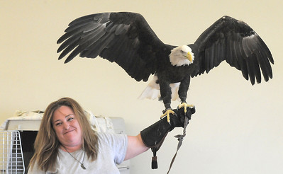 Heidi Bucknam, executive director of the Birds of Prey foundation, presents Adam, a Bald Eagle, to the audience during the presentation for the Broomfield Open Space Foundation at the Broomfield Community Center on Saturday. September 24, 2011 staff photo/ David R. Jennings