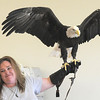 Heidi Bucknam, executive director of the Birds of Prey foundation, presents Adam, a Bald Eagle, to the audience during the presentation for the Broomfield Open Space Foundation at the Broomfield Community Center on Saturday.<br /> September 24, 2011<br /> staff photo/ David R. Jennings