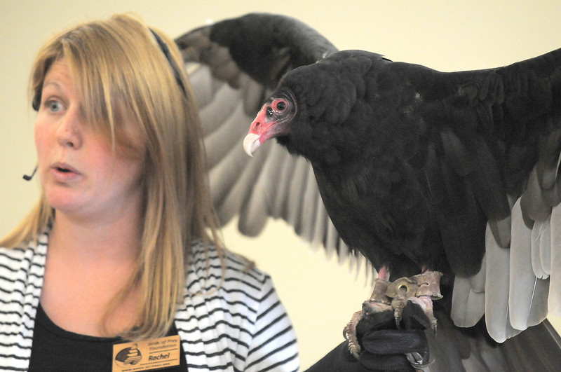 Rachel Mansfield talks about Turkey Vultures while holding Chuck during the Birds of Prey Foundation presentation for the Broomfield Open Space Foundation at the Broomfield Community Center on Saturday.<br /> September 24, 2011<br /> staff photo/ David R. Jennings