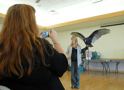 A member of the audience takes a picture of Rachel Mansfield holding Chuck, a turkey Vulture, during the Birds of Prey Foundation presentation for the Broomfield Open Space Foundation at the Broomfield Community Center on Saturday. September 24, 2011 staff photo/ David R. Jennings