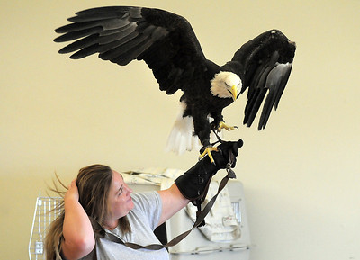 Heidi Bucknam, executive director of the Birds of Prey foundation, with Adam a Bald Eagle gives an educational talk about Bald Eagles during the presentation for the Broomfield Open Space Foundation at the Broomfield Community Center on Saturday. September 24, 2011 staff photo/ David R. Jennings