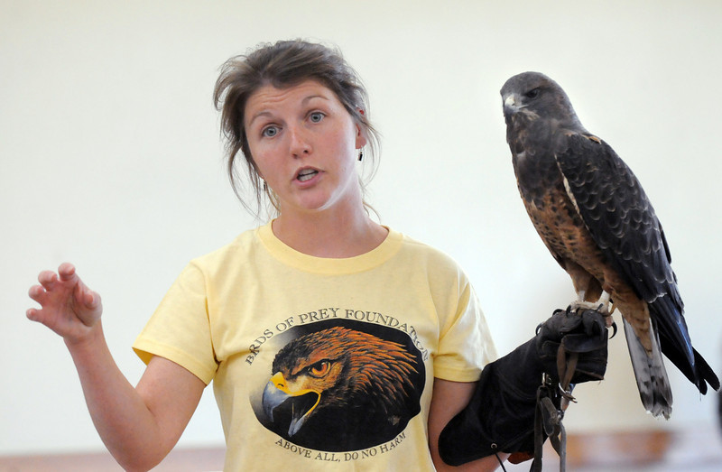 Rachel Mansfield, assistant director of the Broomfield based Birds of Prey Foundation, talks about Sierra, a dark morph Swainson's  Hawk , during the presentation at the Broomfield Community Center on Saturday.<br /> September 25, 2010<br /> staff photo/David R. Jennings