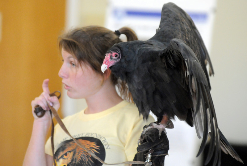 Rachel Mansfield, assistant director of the Birds of Prey Foundation, explains the traits of the beak of  Chuck, a Turkey Vulture, during the presentation at the Broomfield Community Center on Saturday.<br /> <br /> September 25, 2010<br /> staff photo/David R. Jennings