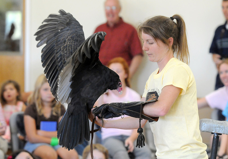 Rachel Mansfield, assistant director of the Birds of Prey Foundation demonstrates how Chuck, a Turkey Vulture, will gently rest on her arm as opposed to a true raptor who would put it's talons into her arm during the presentation at the Broomfield Community Center on Saturday.<br /> <br /> September 25, 2010<br /> staff photo/David R. Jennings