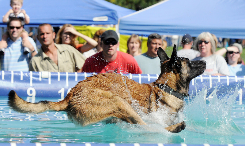 Mick, a Belgium Melanor, owned by Cindy Aeberli, jumps for distance  during the Dock Dogs cimpetition at Broomfield Days at Midway Park on Saturday.<br /> <br /> Sept. 19, 2009<br /> Staff photo/David R. Jennings