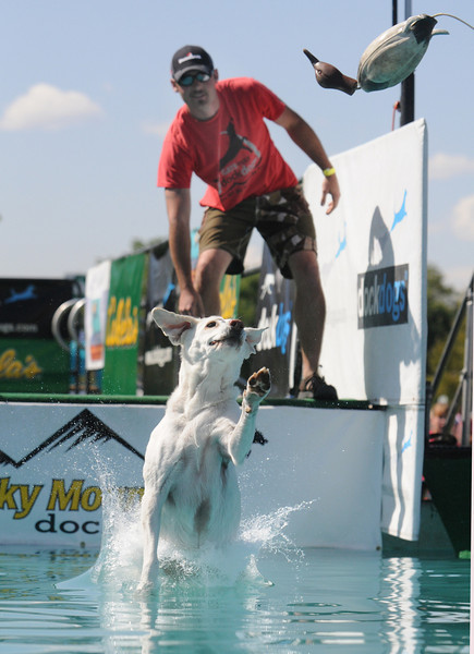 Mike Dameron throws a duck decoy as his dog, Quinn,  jumps into the water during the Dock Dogs contest at Broomfield Days at Midway Park on Saturday.<br /> <br /> Sept. 19, 2009<br /> Staff photo/David R. Jennings