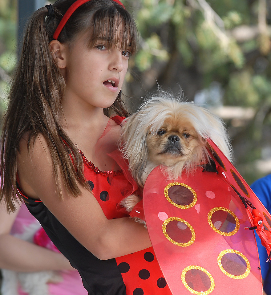 Kayla Kermaier holds her dog Chewy dressed as ladybugs for the Best Dressed Dog Contest at Broomfield Days on Saturday.<br /> <br /> September 18, 2010<br /> staff photo/David R. Jennings