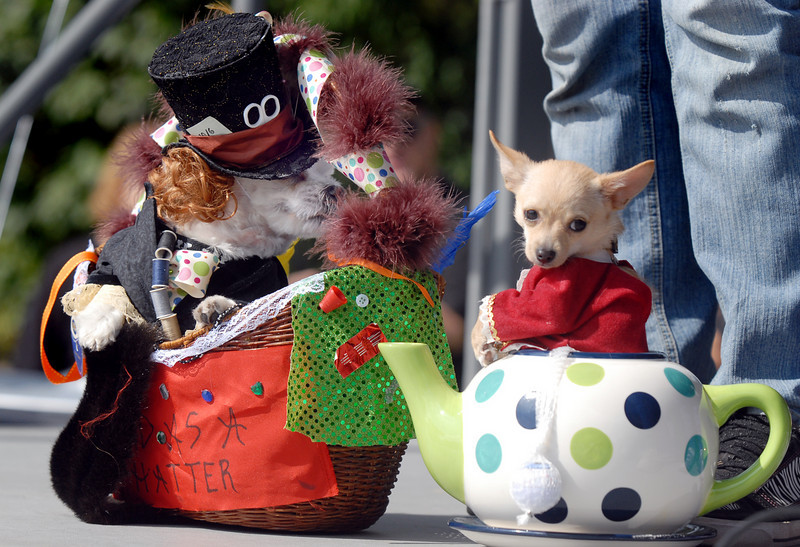 Nimbus, left, dressed as the Mad Hatter and Chetoh, the Door Mouse during the Best Dressed Dog contest at Broomfield Days on Saturday.<br /> <br /> September 18, 2010<br /> staff photo/David R. Jennings