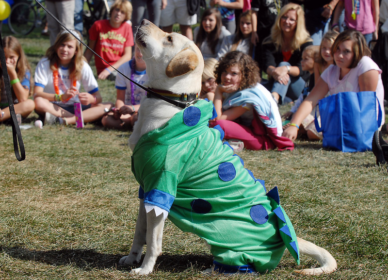 Layla dressed as Laylasaurus Rex owned by Jerrod Fassler won the Best Dressed Dog Contest at Broomfield Days on Saturday.<br /> <br /> September 18, 2010<br /> staff photo/David R. Jennings