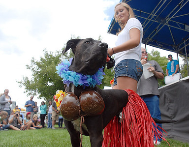 Kate Gartley dressed her dog Jack as a hula girl won the big dog competition in the Best Dressed Dog Contest during Broomfield Days at Midway Park on Saturday. September 17, 2011 staff photo/ David R. Jennings