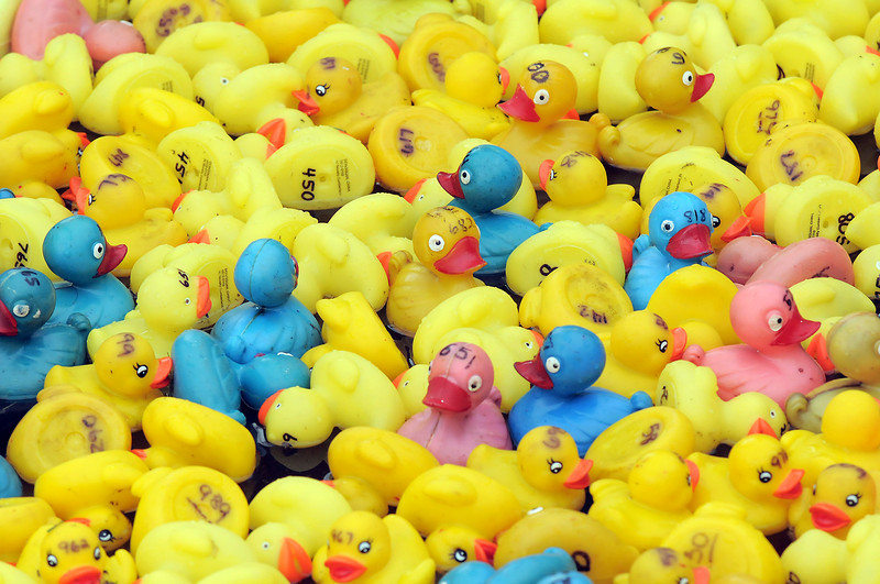 Ducks for the Broomfield High Duck Race during Broomfield Days at Midway Park on Saturday.<br /> September 17, 2011<br /> staff photo/ David R. Jennings