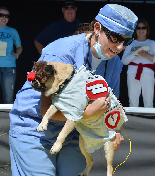 Bubba was dressed as Operation dog by his owner Dana Oughton for the Best Dressed Dog contest during Broomfield Days at Midway Park.<br /> September 15, 2012<br /> staff photo/ David R. Jennings
