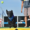 Bear dives after a ball tossed by owner Jeannie Garcia of Avon for the Dock Dogs competition during Broomfield Days at Midway Park.<br /> September 15, 2012<br /> staff photo/ David R. Jennings