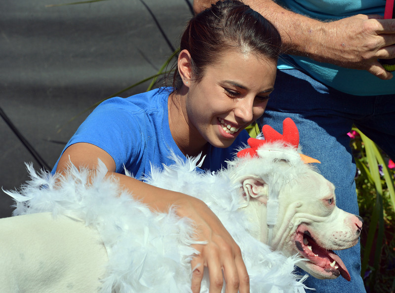 Jessica Whitcomb congratulates her family dog Rhiley, an 8 1/2 month-old boxer dressed as a chicken, after he won grand champion in the Best Dressed Dog contest during Broomfield Days at Midway Park.<br /> September 15, 2012<br /> staff photo/ David R. Jennings