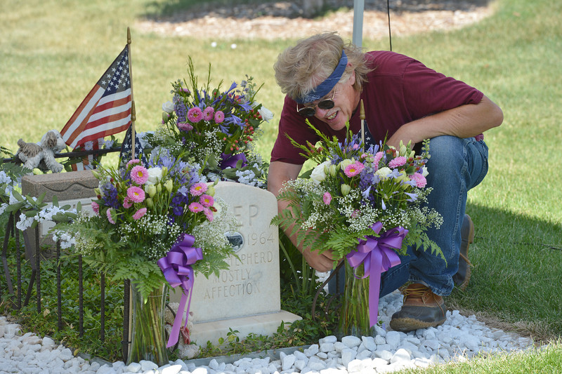 Andy Uryevick arranges flowers around Shep the turnpike dog's grave for the  Broomfield Depot Museum open house on Saturday.<br /> <br /> June23, 2012<br /> staff photo/ David R. Jennings