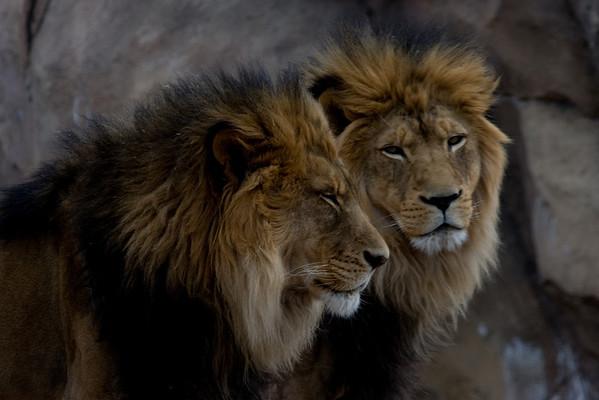 Photo by Bob Krugmire/Broomfield Photography Club