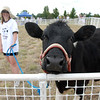 Elaine Jones leads Fred the Cow around the pen for the Cow Plop Drop fundraiser for Meals on Wheels at the Great American Picnic at the Broomfield County Commons Park on Monday.<br /> <br /> July 4, 2011<br /> staff photo/ David R. Jennings
