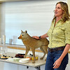 Mary Ann Bonnell, City of Aurora naturalist, explains different behaviors of coyotes with a mannequin coyote during her Coyote observer training course as a part of the Denver Metro Area Coyote Behavior Study at the Broomfield Community Center on Thursday.<br /> June21, 2012<br /> staff photo/ David R. Jennings