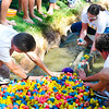 Gathering ducks from the duck race at Broomfield Days on Saturday.<br /> Phoro/Dylan Otto Krider