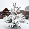 Trees covered in snow in front of the Audi during the December snow storm on Thursday <br /> <br /> December 22, 2011<br /> staff photo/ David R. Jennings