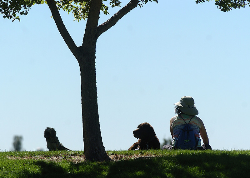 BE0919DAZE22<br /> An owner rests with her dogs after participating in Dog Daze at the Bay on Saturday.<br /> <br /> September 11, 2010<br /> staff photo/David R. Jennings