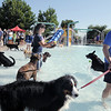 Calvin Harding, right, leads his dog Koda in the water while Lisa Lefever, left, and Kelsey Finnegan throw balls for other dogs during Dog Daze at the Bay on Saturday.<br /> September 10, 2011<br /> staff photo/ David R. Jennings