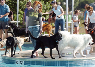 Paige DeBolt is surrounded by dogs on the peninsula of the pool  during Dog Daze at the Bay on Saturday. September 10, 2011 staff photo/ David R. Jennings