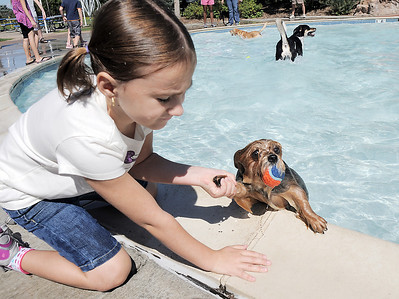 Ashley Goldston, 7, pulls her dog Lola out of the water of the kiddy pool  during Dog Daze at the Bay on Saturday. September 10, 2011 staff photo/ David R. Jennings