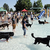 People watch their dogs play in the water during Dog Daze at the Bay on Saturday.<br /> September 10, 2011<br /> staff photo/ David R. Jennings